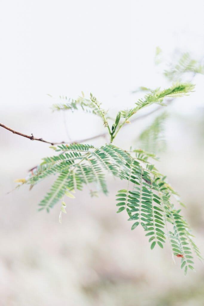 Grön växt